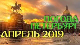 2019.04.10. Погода Петербург. Утро. Товары для животных.