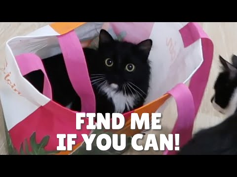 Cats And Shopping Bags | Uni And Nami