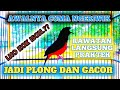 Murai Cuma Ngeriwik Jadi Plong Dan Gacor Praktek Langsung Broooooo  Mp3 - Mp4 Download