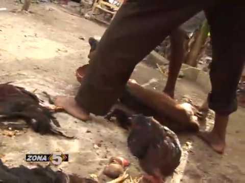 El vudu en Haiti.