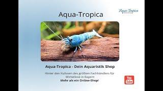 Zucht- und Verkaufsanlage Aqua-Tropica Wirbellosenzucht Wolfinger