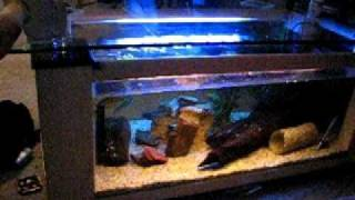 Mvi_3005.avi  Coffee Table Aquarium