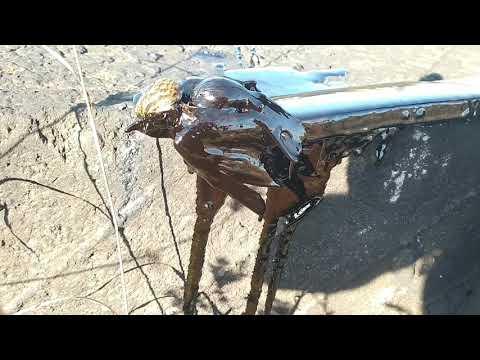 Daños por el petróleo filtrado en La Lora
