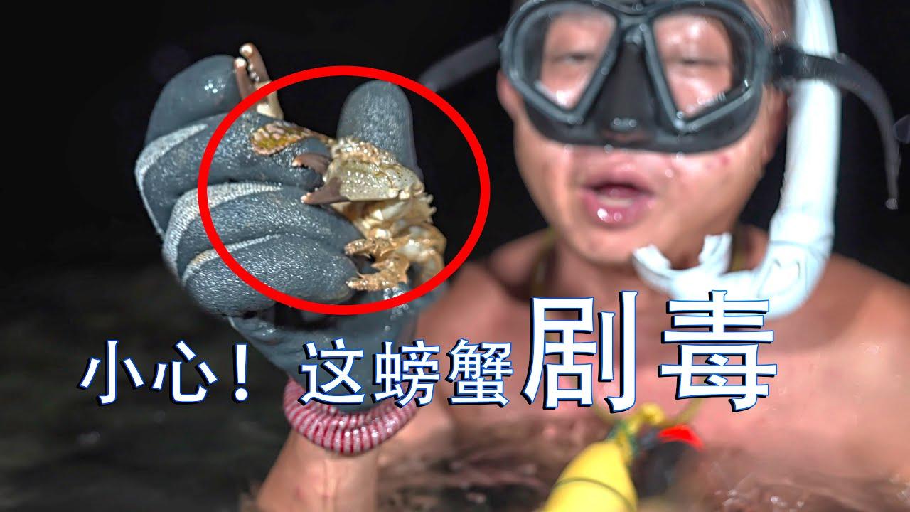 夜间潜水抓到剧毒螃蟹,漠叔亲自下海拍片科普,提醒大家要带套