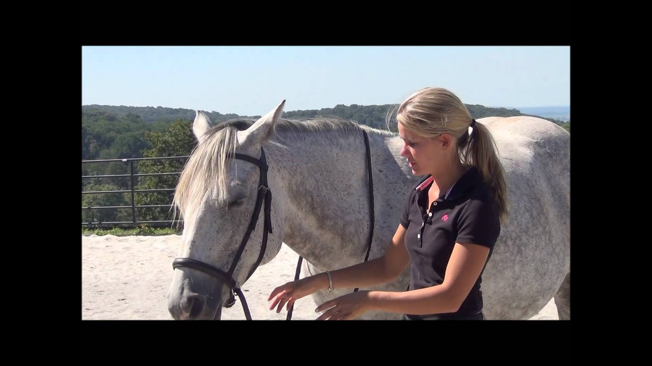 Review of the Dr  Cook Bitless Bridle – When and Why I use