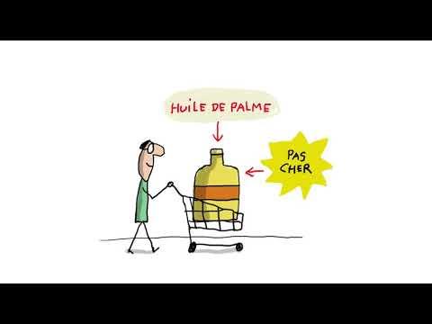 A quoi ça sert l'huile de palme ? (EP. 679) - 1 jour, 1 question