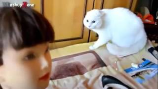 Смешное видео! Коты и мягкие игрушки