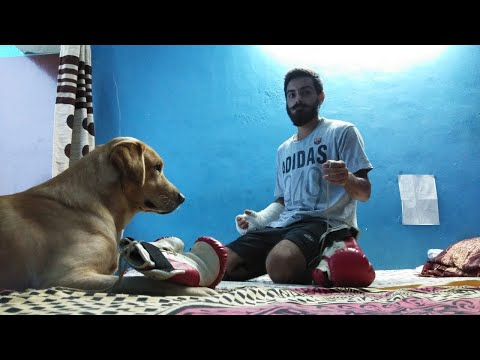 How to annoy your dog | play with your dog | labrador
