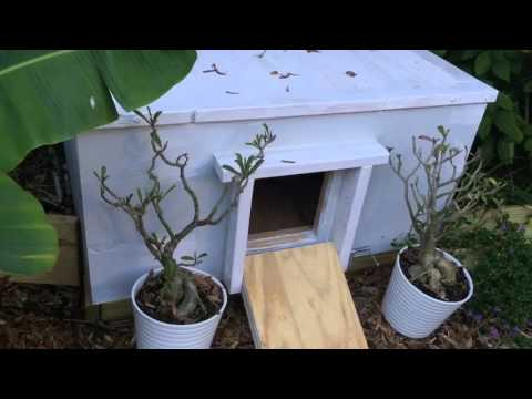 New tortoise house