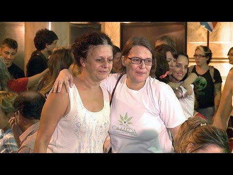 """Médicos, usuarios y familiares califican de """"gran avance"""" ley sobre Cannabis medicinal"""