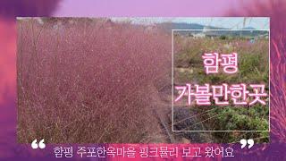 #함평가볼만한곳  #주포한옥마을 #가을풍경영상 핑크뮬리…