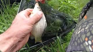 рыбалка на спиннинг на небольшом озере в начале мая Карась_с_Карпом_на_спиннинг