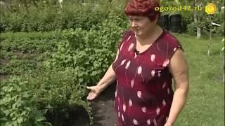 Планирование участка: на 6 сотках огород, теплица, сад, цветник