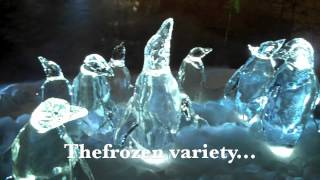 Penguins Rule at 'Frozen Planet' Premiere