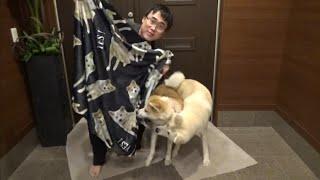 患者様から秋田犬ブランケットいただきました!