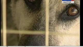 За что растерзали собаку в Ижевске?