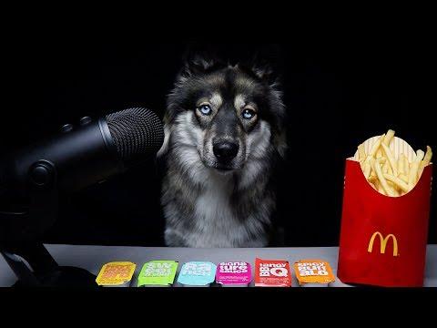 ASMR Dog Reviews McDonalds Sauces!