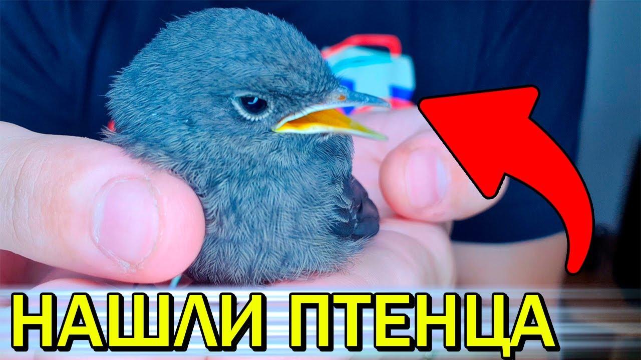 Нашли И Спасли Редкого Птенца Который Выпал Из Гнезда!!!