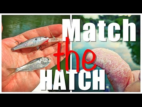 Why You Should Always MATCH THE HATCH!!!