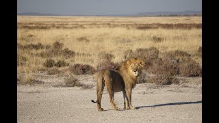 Animals of Namibia: Part VII