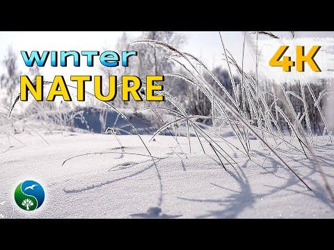 КРАСИВЫЕ ЗИМНИЕ ПЕЙЗАЖИ. Зима - красавица, зимние пейзажи, БЕЛЫМ БЕЛО.