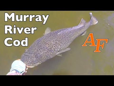 Murray Cod New England Gorge Country Canoe Fishing Day 10 of trip Andy