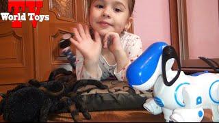 Черный паук против собаки-робота.    ВЛОГ   Spider VS robot dog