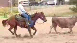 Cutting Horse: Smart Tule Light