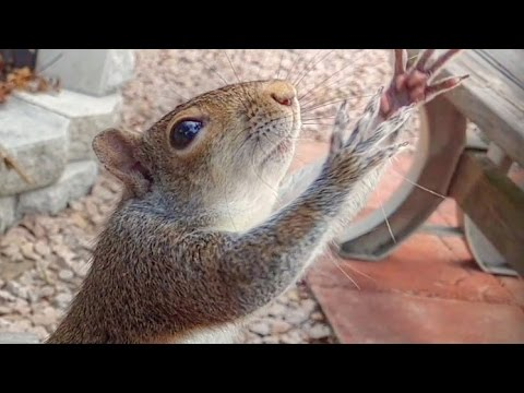Teaching Squirrels to Play Catch