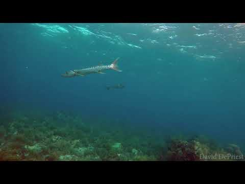Molasses Reef - Aquarium   8-26-17