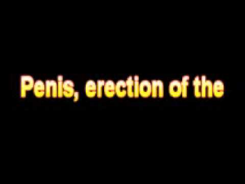 in Penis class erection