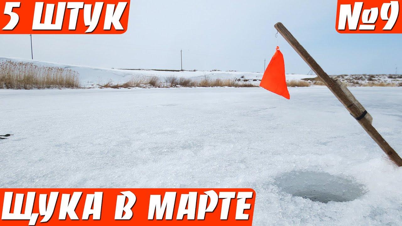Щука по последнему льду на жерлицы (две рыбалки)