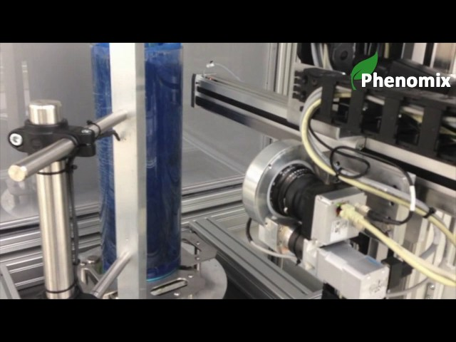 RhizoCab - Automated Root phenotyping