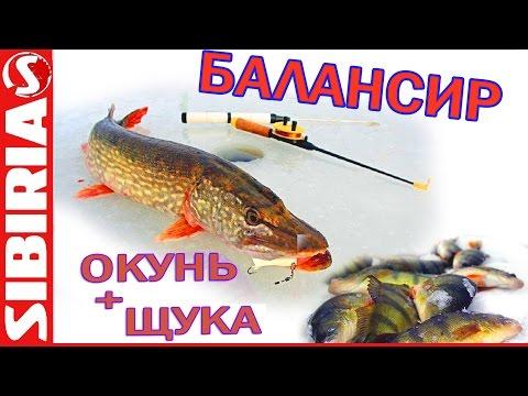 зимняя рыбалка на окуня - 2016-01-17 15:29:22