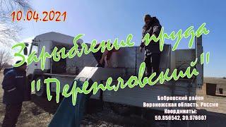 Зарыбление пруда \Перепеловский\ 10.04.2021