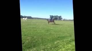 Девушка послала коня   а он её
