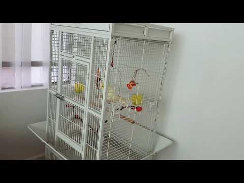 Review Prevue Birds Cage For My Cockatiel♡