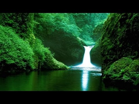 Beautiful Jungle Music - Amazon Rainforest