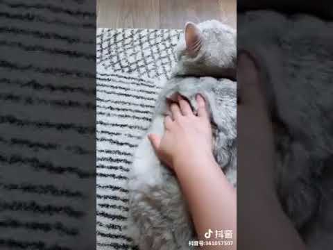 Cat Series: When you are rubbing a fat cat