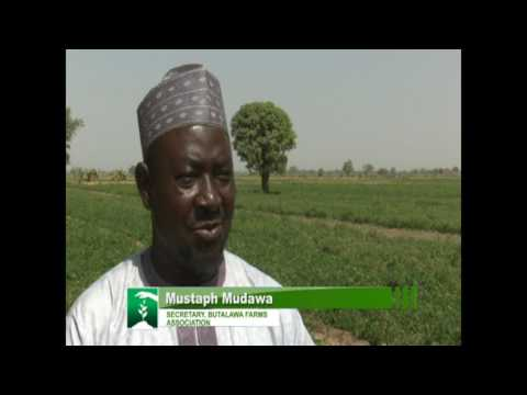 FARMERS MARKET: KANO TOMATO FARMERS SMILE AGAIN