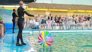 Демо-ролик Ярославского Дельфинария 15 мин(, 2011-10-28T22:49:05.000Z)