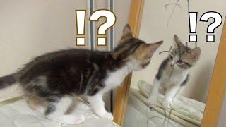 猫に生まれて初めて鏡を見せてみた