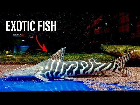 EXOTIC FISH STORE In SINGAPORE - JZX Pets Boutique