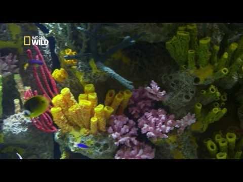 Un aquarium présentant un récif corallien intact
