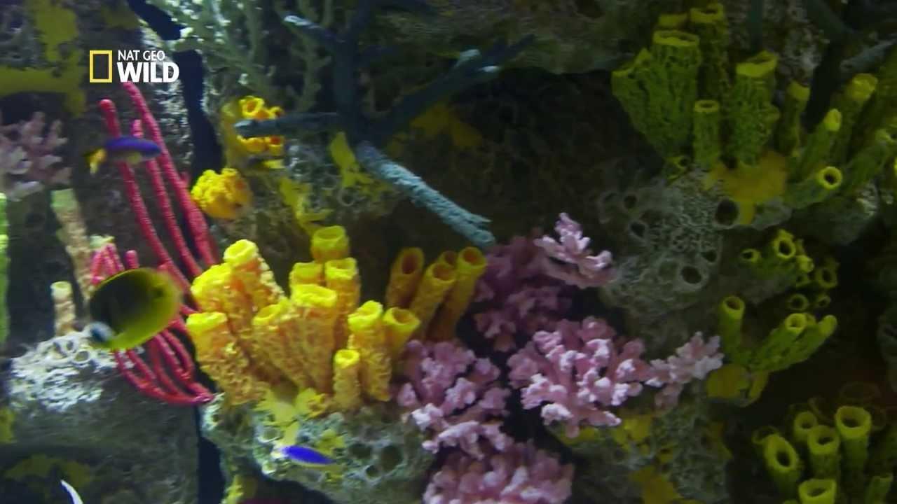 un aquarium pr sentant un r cif corallien intact youtube. Black Bedroom Furniture Sets. Home Design Ideas