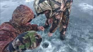 Первые поимки форели со льда в этом новом году