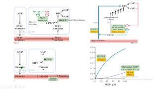 reciclaje purinas purine salvage  HGPRT Lesch Nyhan bioquímica biochemistry