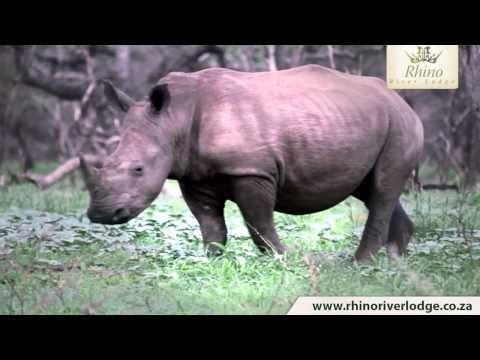 Rhino River lodge - Zululand Rhino Reserve - South Africa