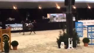 Talks cheap, 7y old Irish mare, Lichtenvoorde