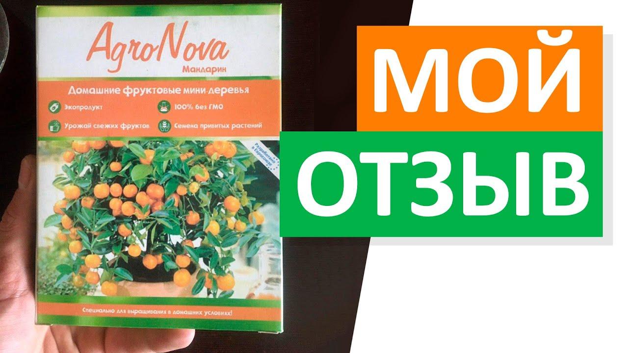 Отзыв на фруктовые мини-деревья Агро Нова (AgroNova)
